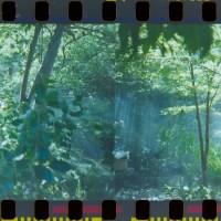 2014 Arboretum Lake Carolyn Random25©JamesECockroft 20141224
