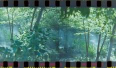 2014-Arboretum, Lake Carolyn, Random|25|©JamesECockroft-20141224