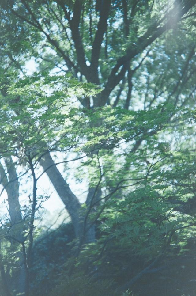 2014-Arboretum, Lake Carolyn, Random|28|©JamesECockroft-20141224