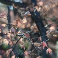 Fort Worth Botanical Gardens D700049©JamesECockroft 20140104