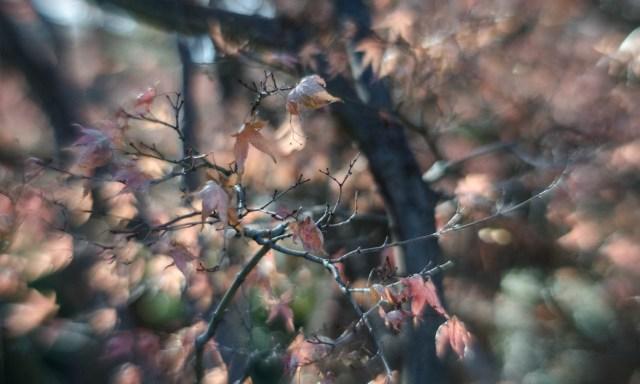 Fort Worth Botanical Gardens D7000|49|©JamesECockroft-20140104