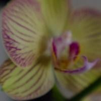 Lens Baby Macrox4©JamesECockroft 20140111