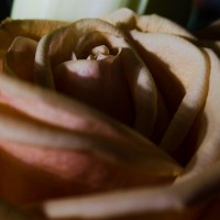 Flashing Roses19©JamesECockroft 20141012