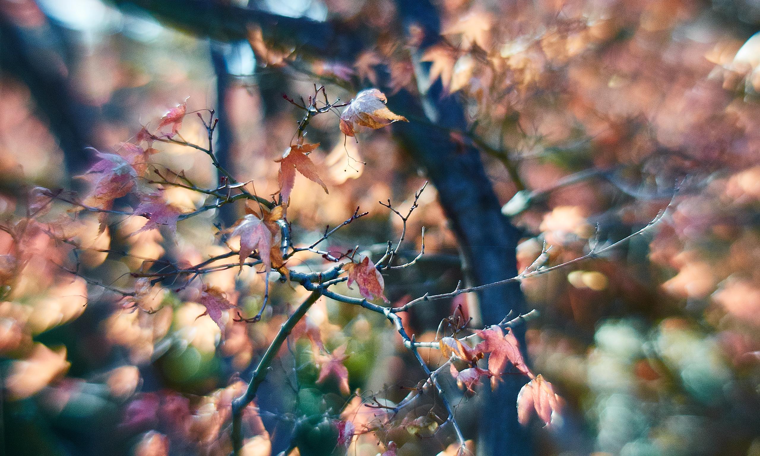 20140104 1152 Fort Worth Botanic Gardens D700 42 ©JamesECockroft 20140104 Capture One
