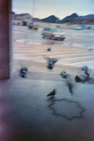 pigeons @400