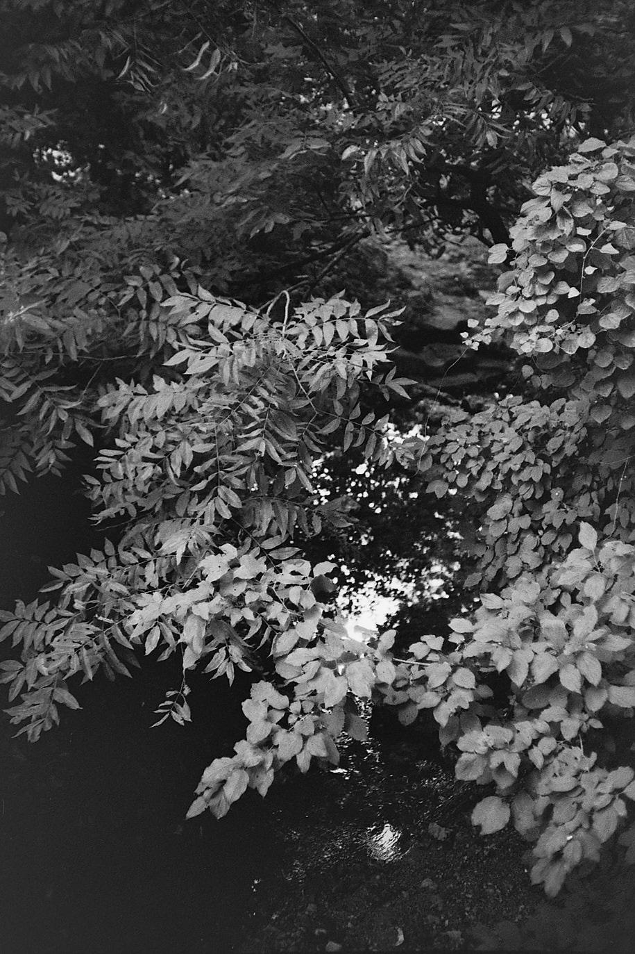 20160821 0939 Random FW Botanical Garden Random ©JamesECockroft 0215