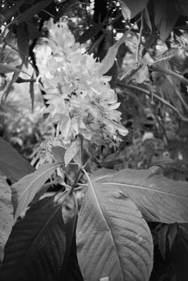 20160821 0943 Random FW Botanical Garden Random ©JamesECockroft 0225