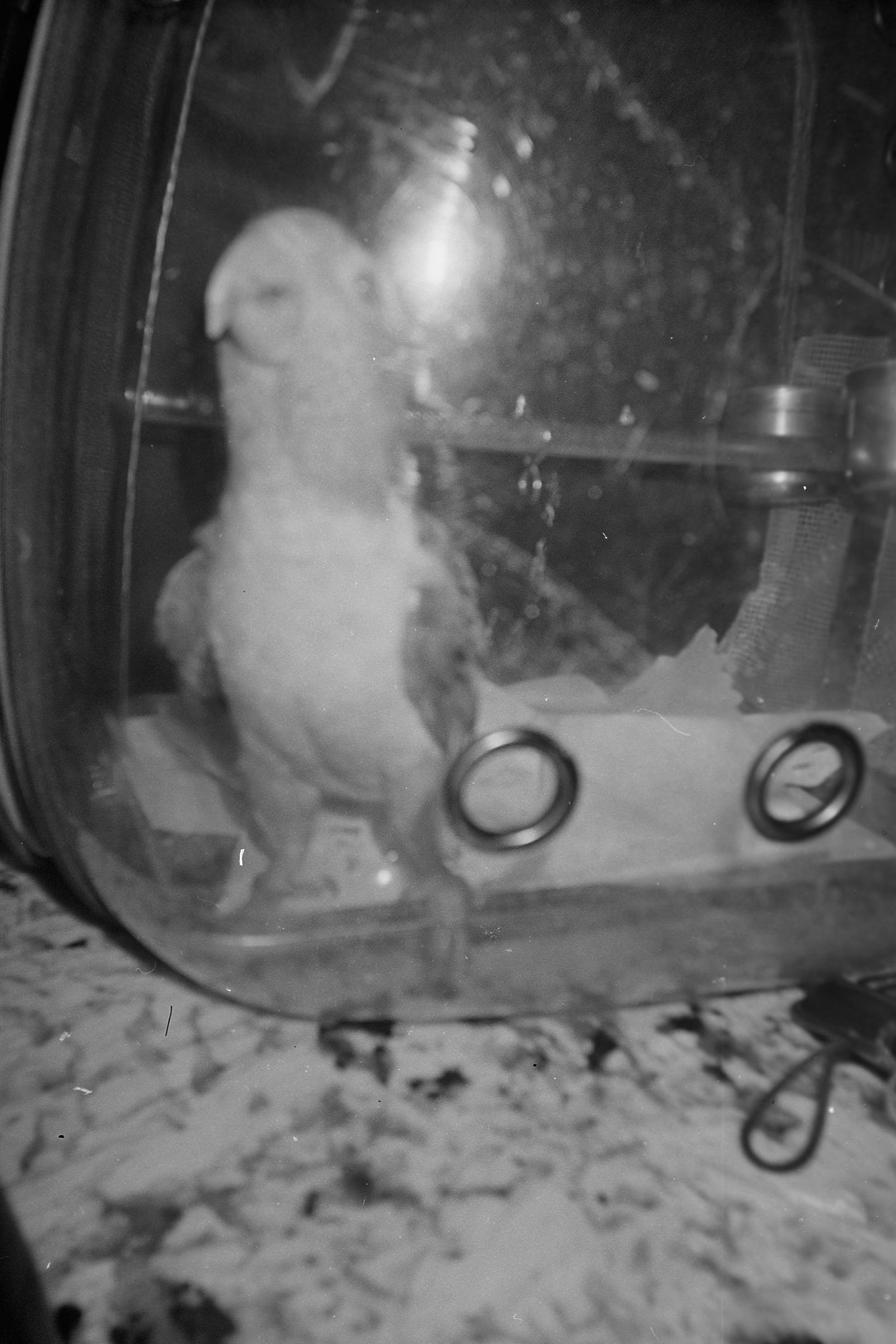 Harman-Black-White-camera-test-7