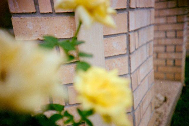 15-roses