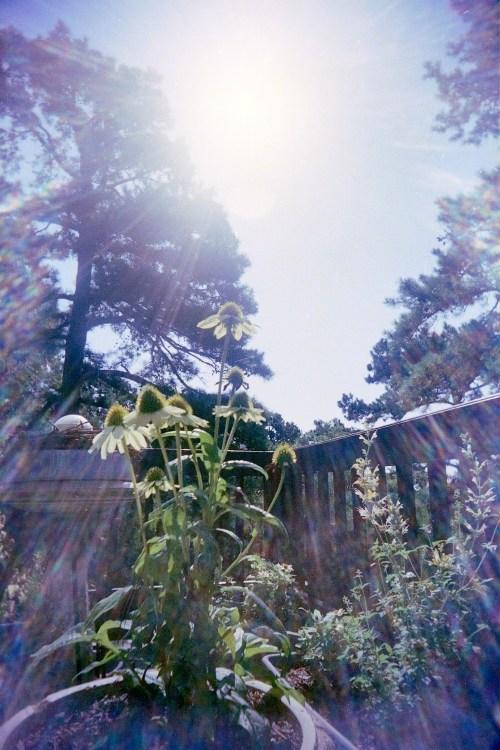 Plant-UWS