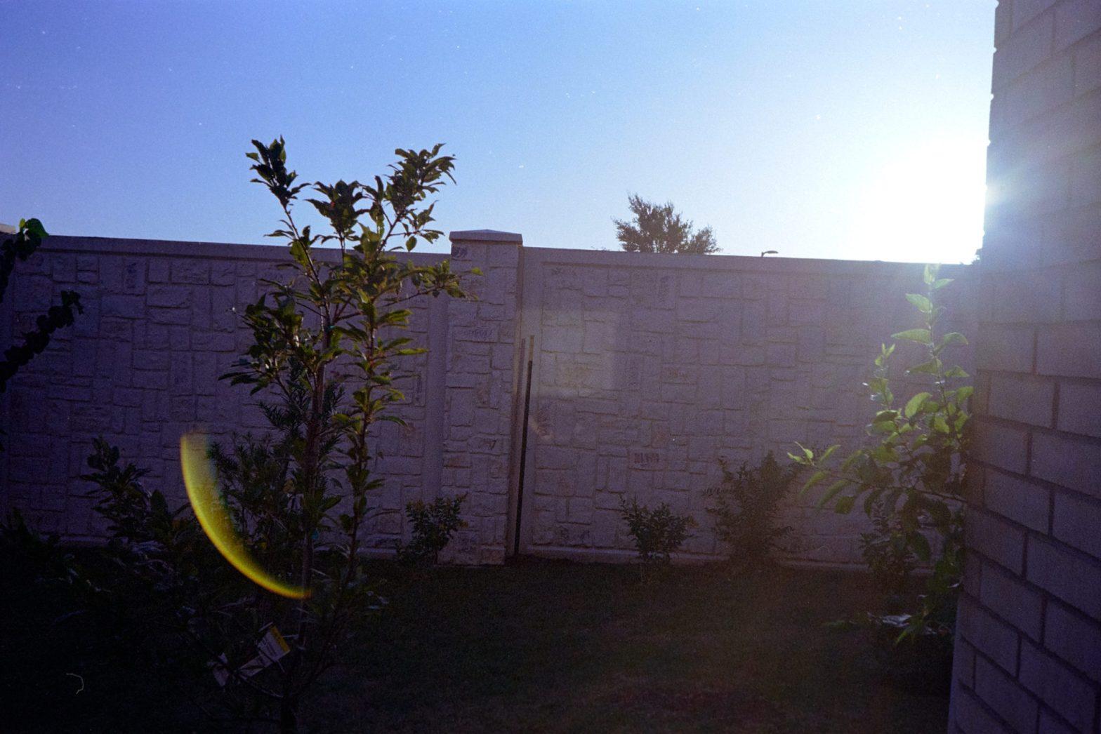 Scenes-from-the-Garden-8