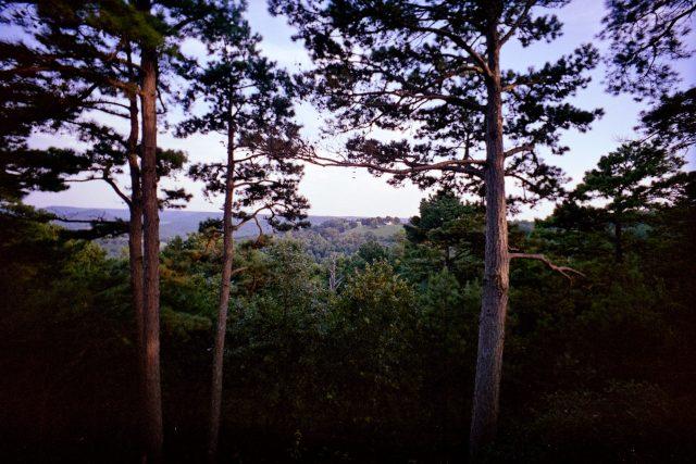 Trees-lcw