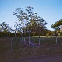 Costa Rica 148©JamesECockroft 20150228