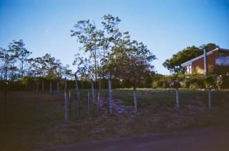 Cariari Photowalk 1|48|©JamesECockroft-20150228