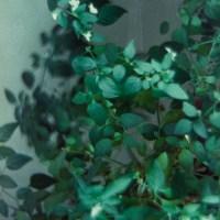 Houseplants 2©JamesECockroft 20150228