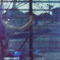 Petzval flare 1©JamesECockroft 20150228