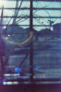 Petzval flare 1|©JamesECockroft-20150228