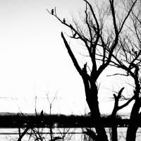 White Rock Lake Tri X29©JamesECockroft 20130404