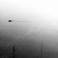 White Rock Lake Tri X34©JamesECockroft 20130405