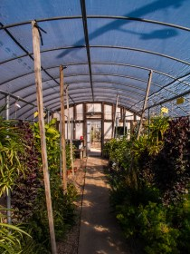 in the greenhouse with the C-5050