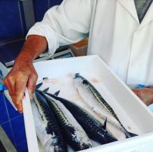 Our fresh mackerel