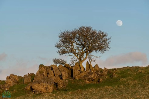Roystone Rocks Lone Tree and the Moon  - Peak District Landscape Photography copy