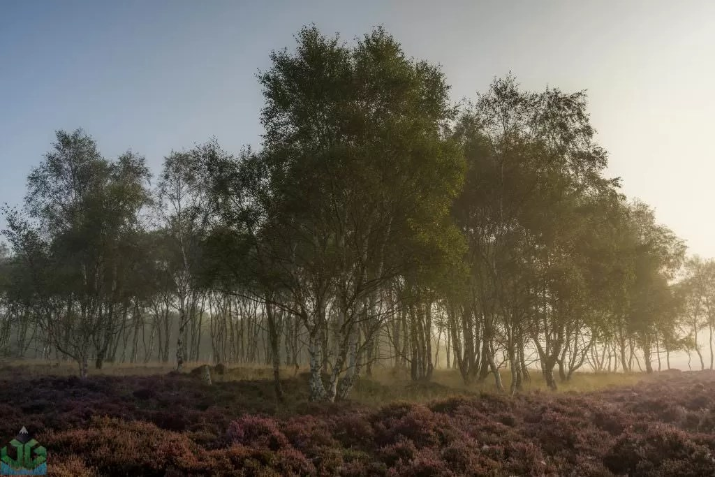 Surprise View in the Mist - Peak District Photography