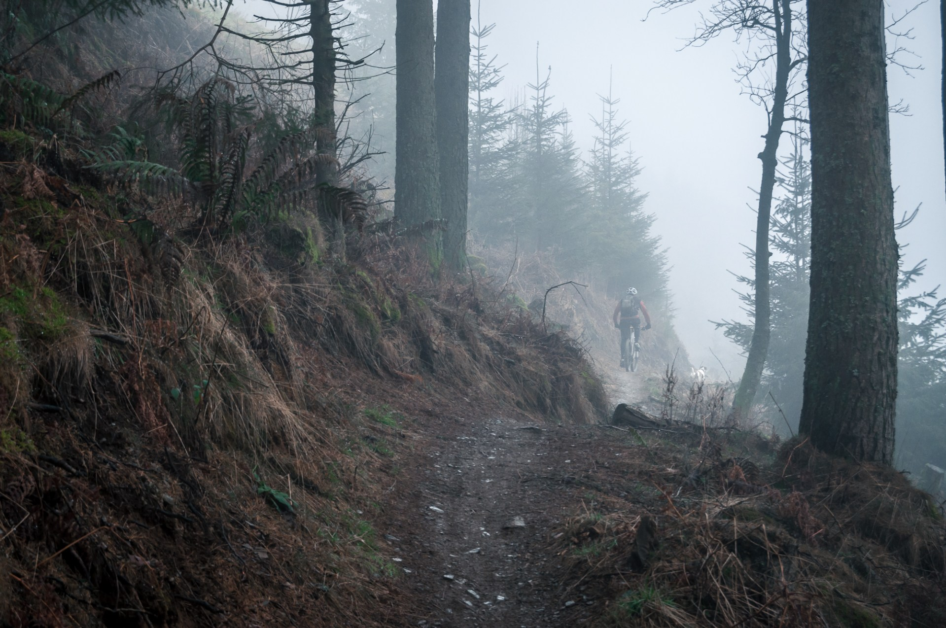 Whinlatter in the mist
