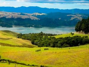 NZ Paddock View