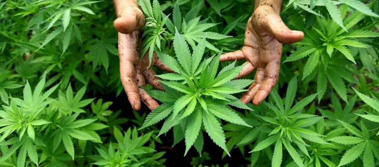the benefits of marijuana w joan bello ep 62