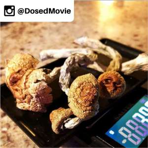 DosedMovie Documentary Psilocybin Mushrooms