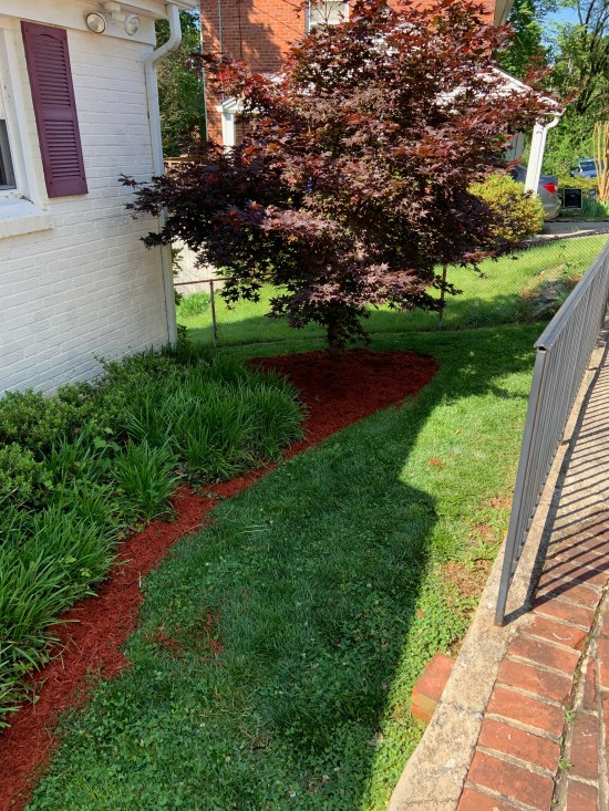 Newly mulched are of the front yard