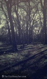 spooky-trees-2