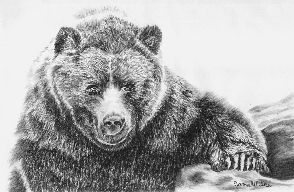 """Bearly Summitted"" - Black and White Charcoal Drawing by Colorado Artist Jamie Wilke - Black Bear with Claws"