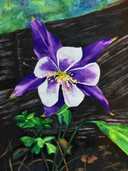 """Columbine on Forest Floor"" - Watercolor Painting by Colorado Artist Jamie Wilke - State Flower"