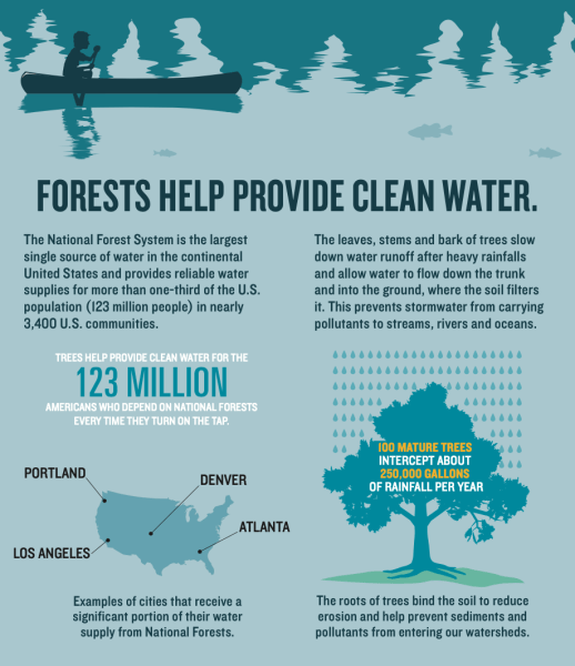 FORESTS HELP PROVIDE CLEAN WATER