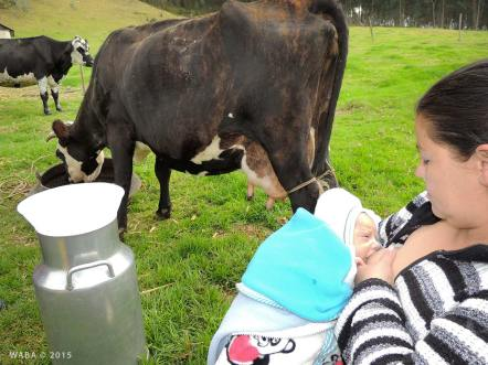 Peasant mother working in the feeding, in Nemocon, Cundinamarca