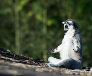 meditation-animal