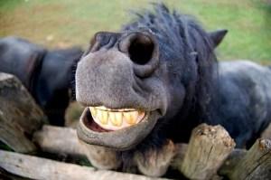 horse-smile