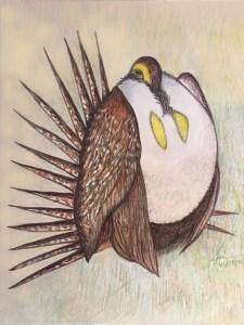 australian-grouse