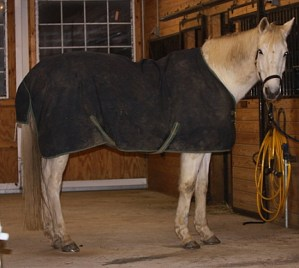 winter care for horses-https://www.jandnfeedandseed.com