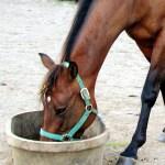 horse q&a proper eating-https://www.jandnfeedandseed.com