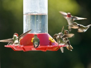 migrating hummingbirds-https://www.jandnfeedandseed.com
