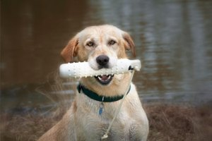 tips for your hunting dog-https://www.jandnfeedandseed.com