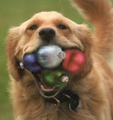 tips for a dog safe christmas tree-https://www.jandnfeedandseed.com