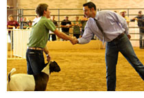 young county stock show-https://www.jandnfeedandseed.com