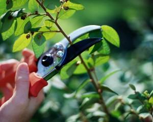 Pruning (1)
