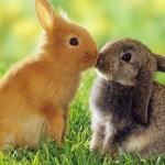 rabbits are coming-https://www.jandnfeedandseed.com