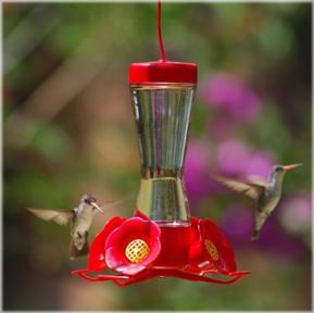 hummingbird friendly yard-https://www.jandnfeedandseed.com