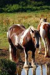 tips for horse hydration- https://www.jandnfeedandseed.com